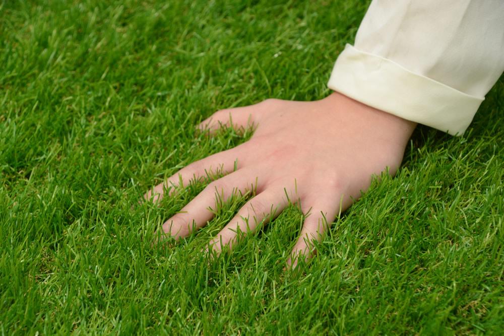 本物の芝生みたい!